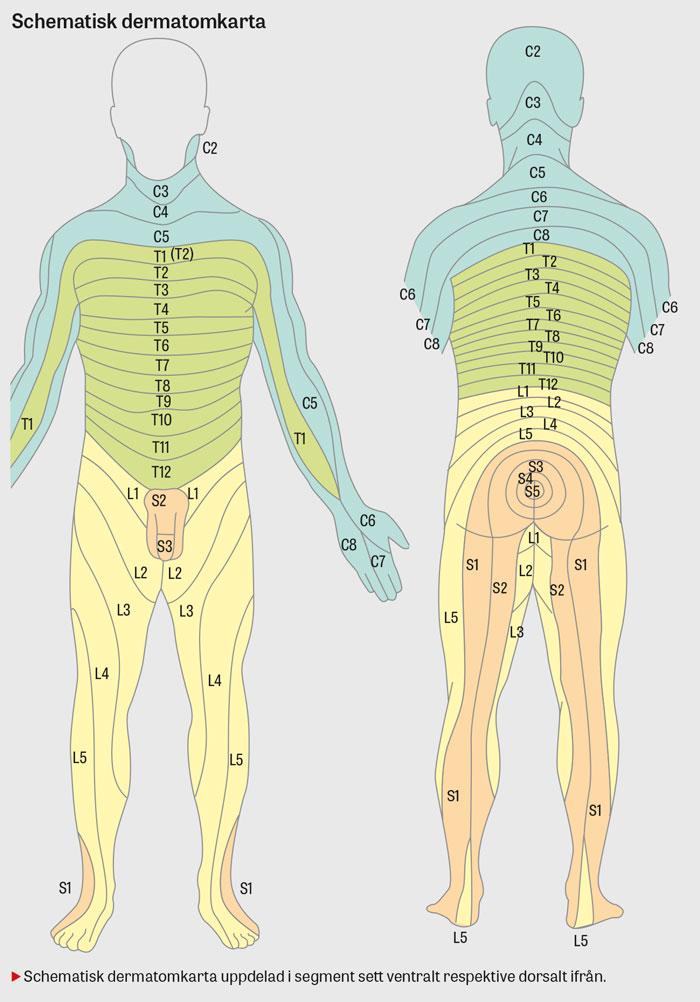 Smärta i nacke och rygg, del 1