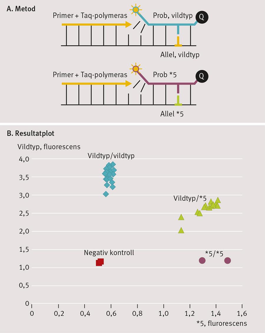 Figur 2. Metod för analys av SLCO1B1 och resultatplott. Genotypen SCLO1B1 analyseras med realtids-PCR med alleldiskriminering (A). Först extraheras DNA från leukocyter i helblod. Sedan mångfaldigas DNA-fragment med hjälp av PCR. I reaktionen finns samtidigt allelspecifika fluorescensmärkta prober. De två proberna är märkta med olika färger. Den ena hybridiserar till den vanliga allelen och den andra till variantallelen. Proberna klyvs i DNA-replikationsprocessen, varvid de börjar fluorescera. Genom att mäta fluorescensens färgspektrum kan man avgöra patientens genotyp (B), där röda fyrkanter = negativa kontroller, blå romber = vildtyp (normala), gröna trianglar = heterozygota för SLCO1B1*5 och vinröda cirklar = homozygota för SLCO1B1*5. De homozygota har störst risk för biverkningar av simvastatin. För analysen används kommersiellt tillgängliga reagens.
