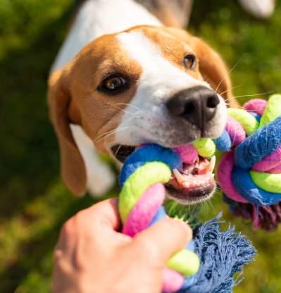 Kritik för bristande vård vid hundbett