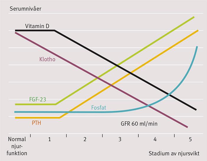 Figur 2. Förändringar i nivåerna av fosfat, PTH, D-vitamin och Klotho (uttryck i njuren) när njurfunktionen försämras från stadium 1 (eGFR >90 ml/min) till 2 (eGFR 60–90 ml/min) till 3 (eGFR 30–60 ml/min) till 4 (eGFR 15–30 ml/min) och slutligen stadium 5 (eGFR <15 ml/min). Nivåerna av FGF-23 stiger tidigt vid försämrad njurfunktion, medan patologiskt förhöjda fosfatnivåer (>1,4 mmol/l)ofta inte observeras förrän i stadium 4. Efter Kuro-o [69].