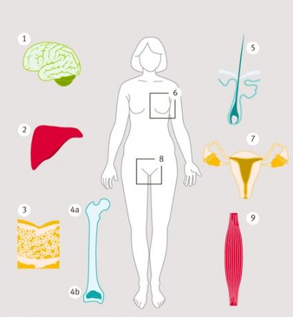 testosteronbrist kvinnor symptom